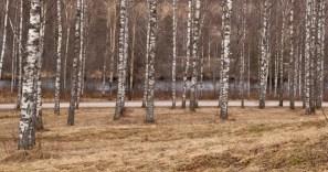 panorama-björk