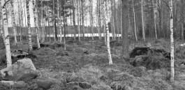 skog-sv