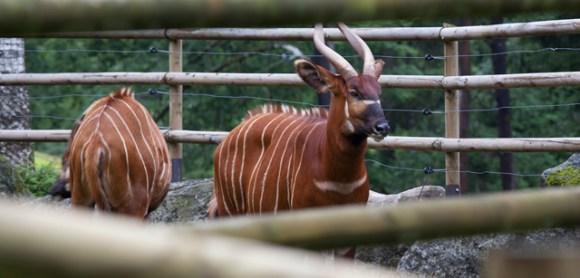 antilop-zoo