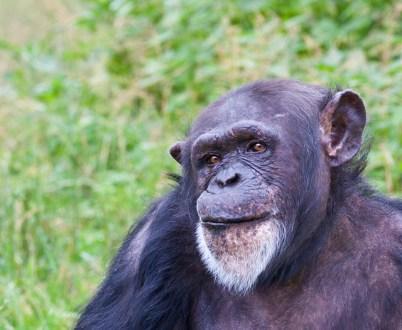 apa-narbild-zoo