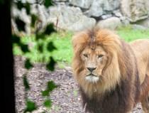 lejon-zoo
