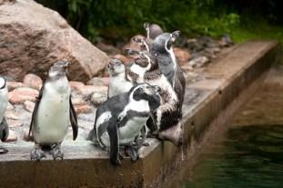 pingvin-zoo