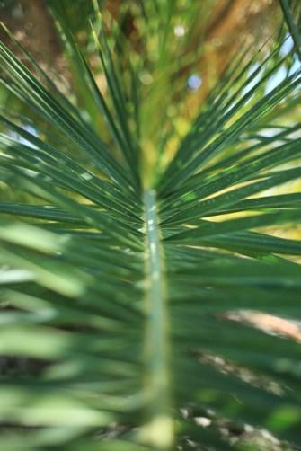 palm-macro-portugal