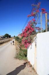 rosa-blommor-portugal