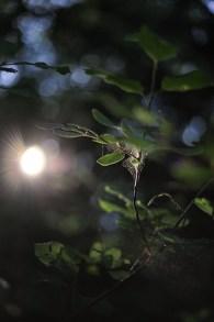 blad-sol-mörkt