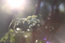 ljus-vit-blomma