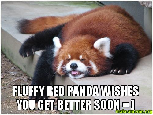 Fluffy Red Panda Wishes You Get Better Soon Make A Meme