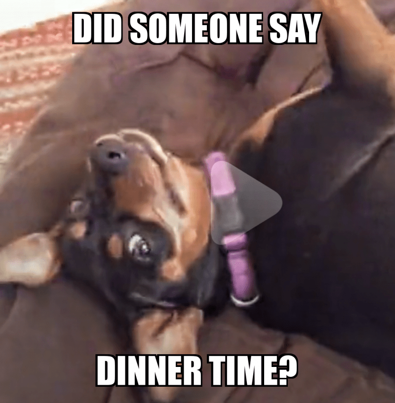 Did Someone Say Dinner Time Food Make A Meme