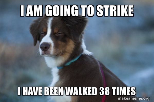 I Am Going To Strike I Have Been Walked 38 Times Unsure Dog