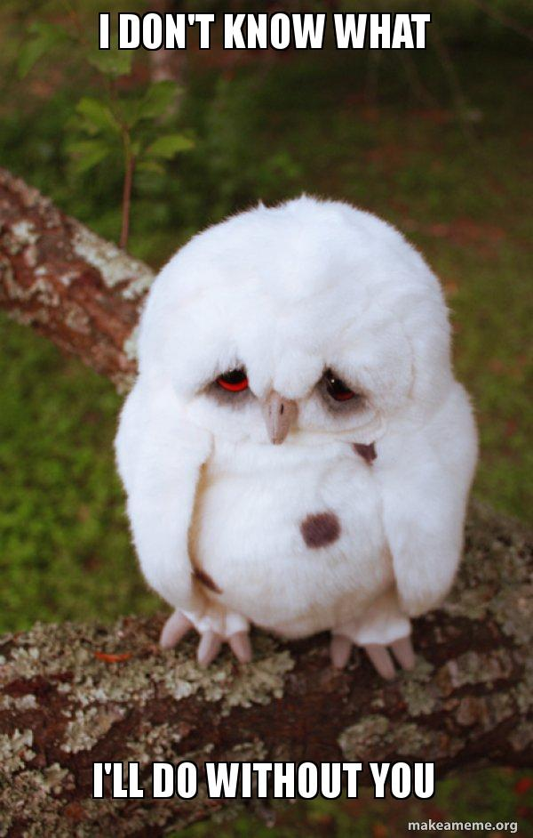 I Don T Know What I Ll Do Without You Sad Owl Make A Meme