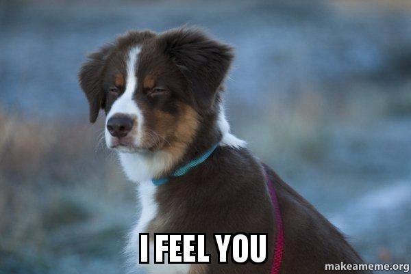 I Feel You Unsure Dog Make A Meme