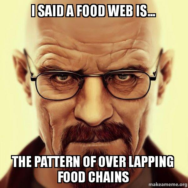 I Said A Food Web Is The Pattern Of Over Lapping Food Chains