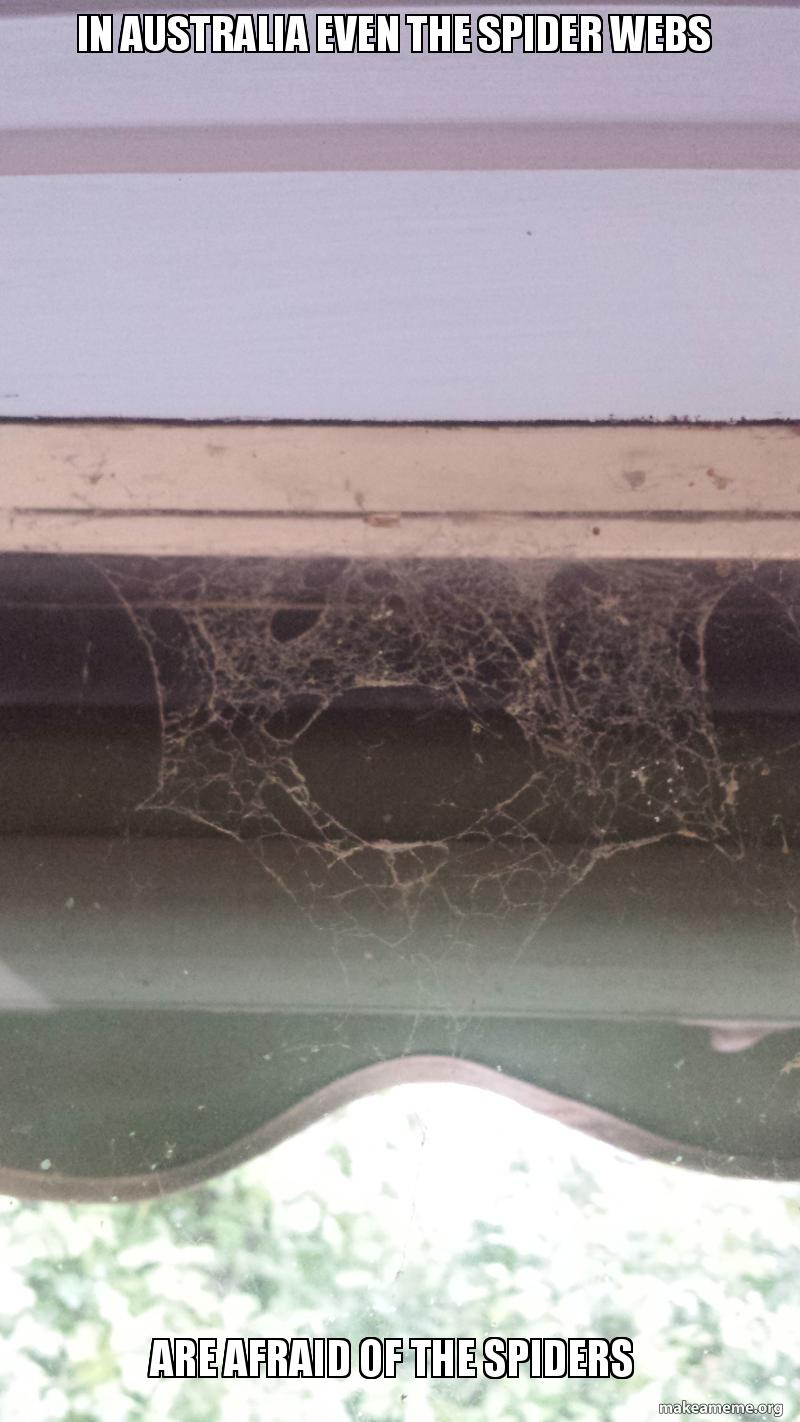 In Australia Even The Spider Webs Are Afraid Of The Spiders