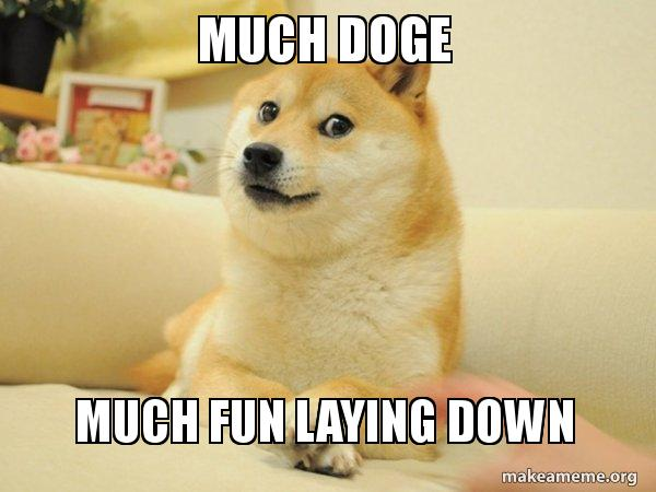 28 Funniest Dog Memes Best Viral Dog Jokes And Pictures