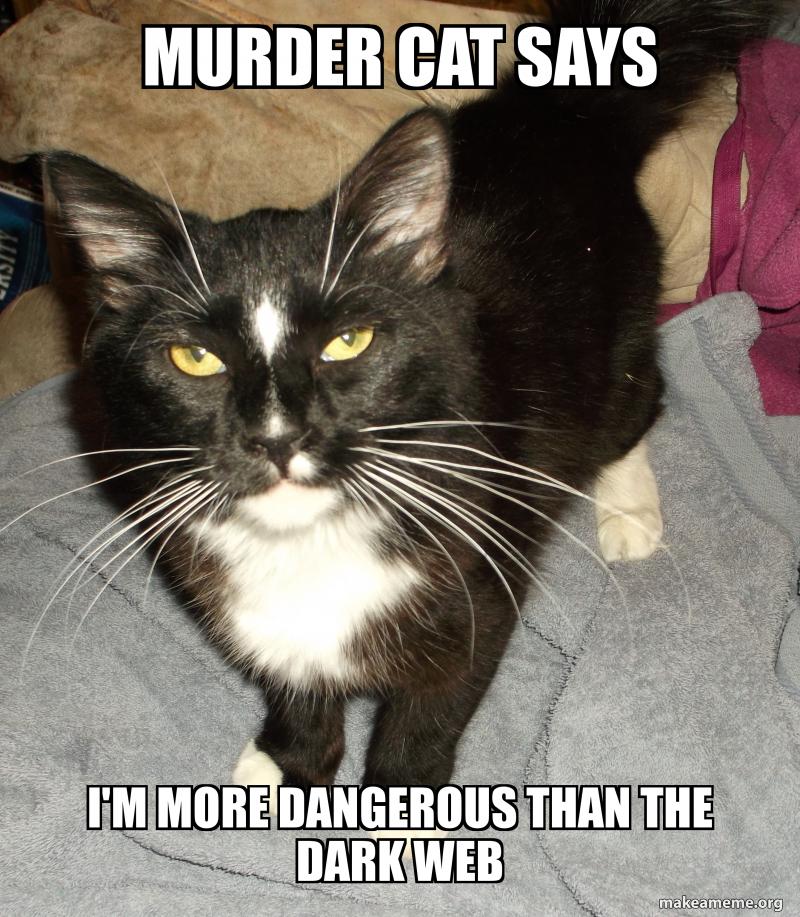 Murder Cat Says I M More Dangerous Than The Dark Web Muder Cat