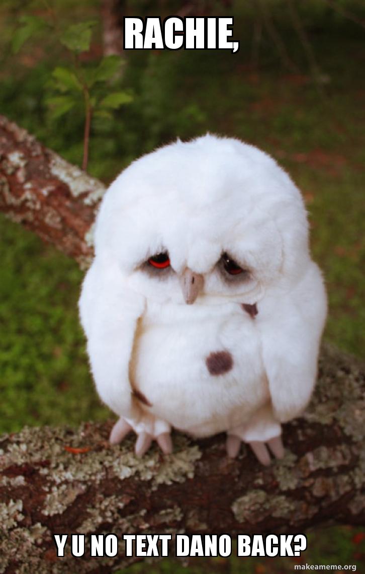 Rachie Y U No Text Dano Back Sad Owl Make A Meme