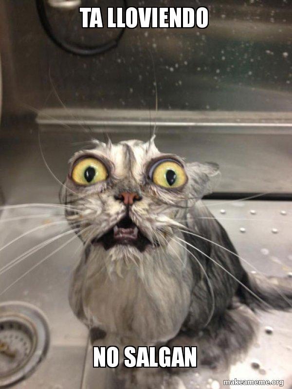 Ta Lloviendo No Salgan Cat Bath Make A Meme