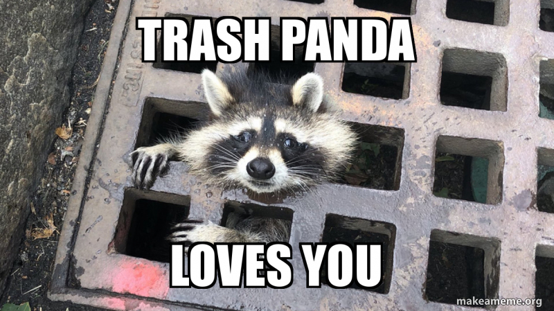 Trash Panda Loves You Make A Meme