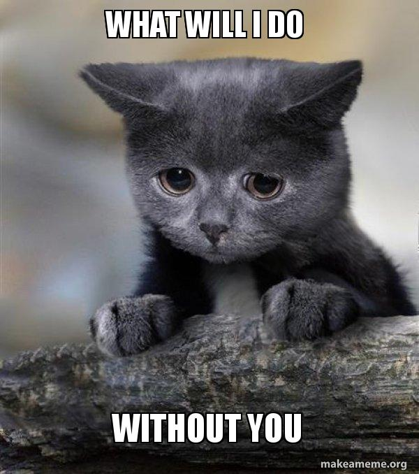 What Will I Do Without You Confession Cat Make A Meme