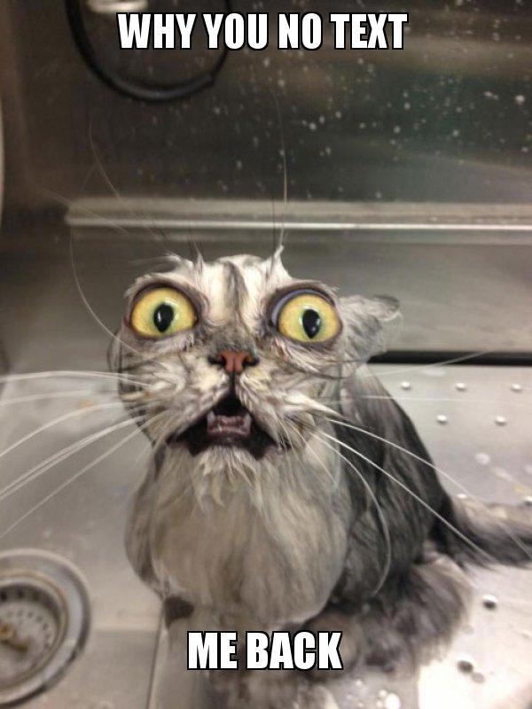 Why You No Text Me Back Cat Bath Make A Meme