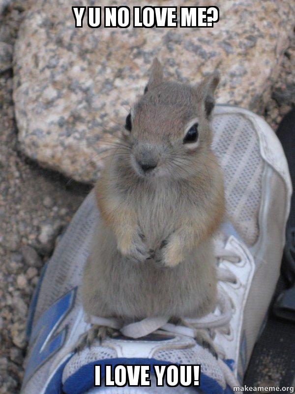 Y U No Love Me I Love You Standover Squirrel Make A Meme