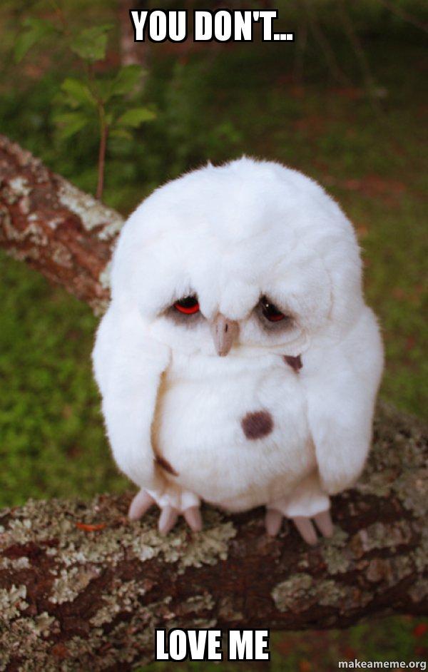 You Don T Love Me Sad Owl Make A Meme