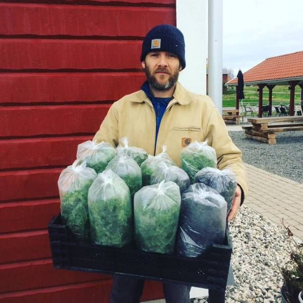 Grönkål till försäljning