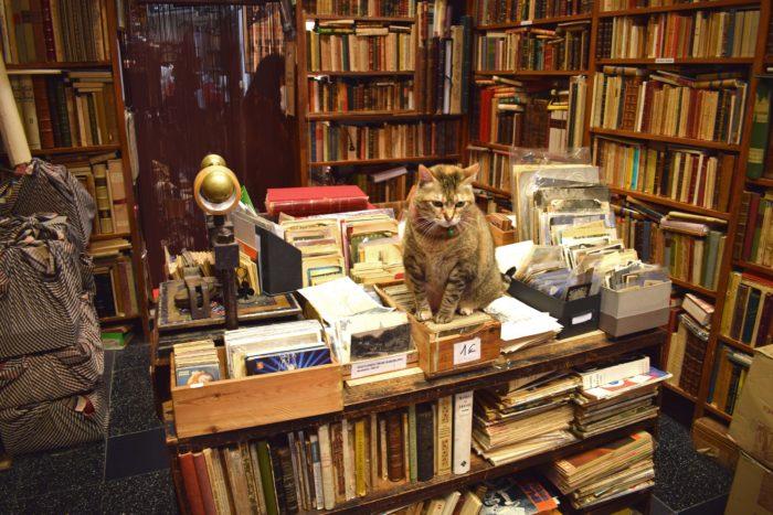 bokhandel i barcelona med katt på bordet