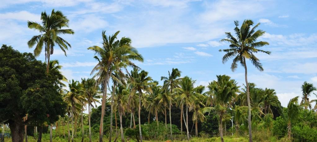 Bra start på vår vecka i Tonga!