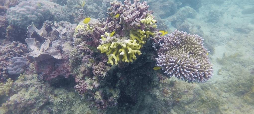 Drömmen om Stora Barriärrevet