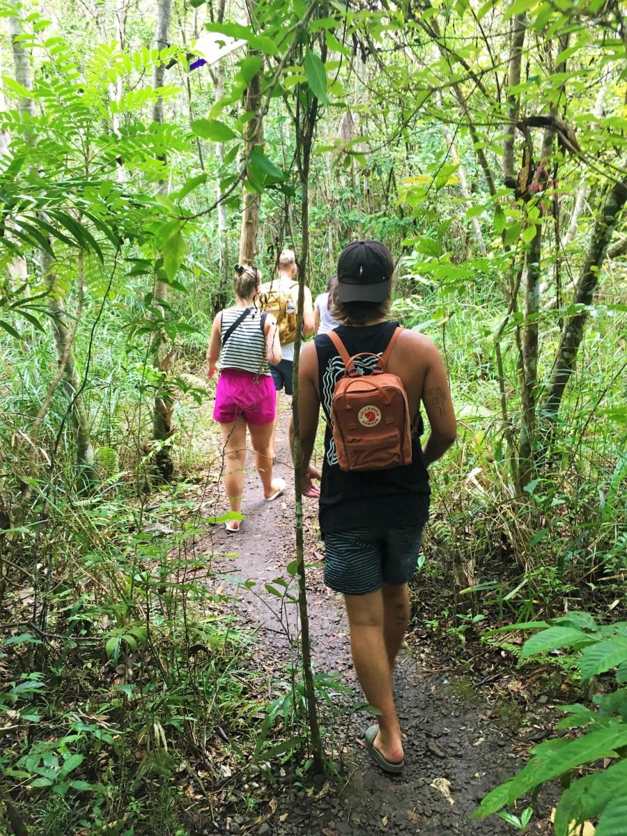 vi går i skogen i tarsier sanctuary