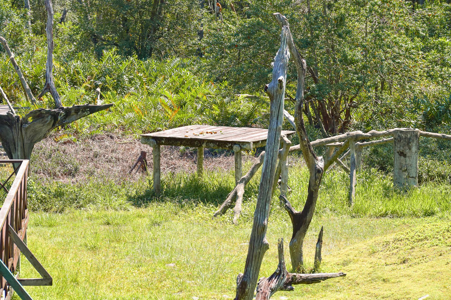 Matplattform i Labuk Bay Proboscis Monkey Sanctuary.
