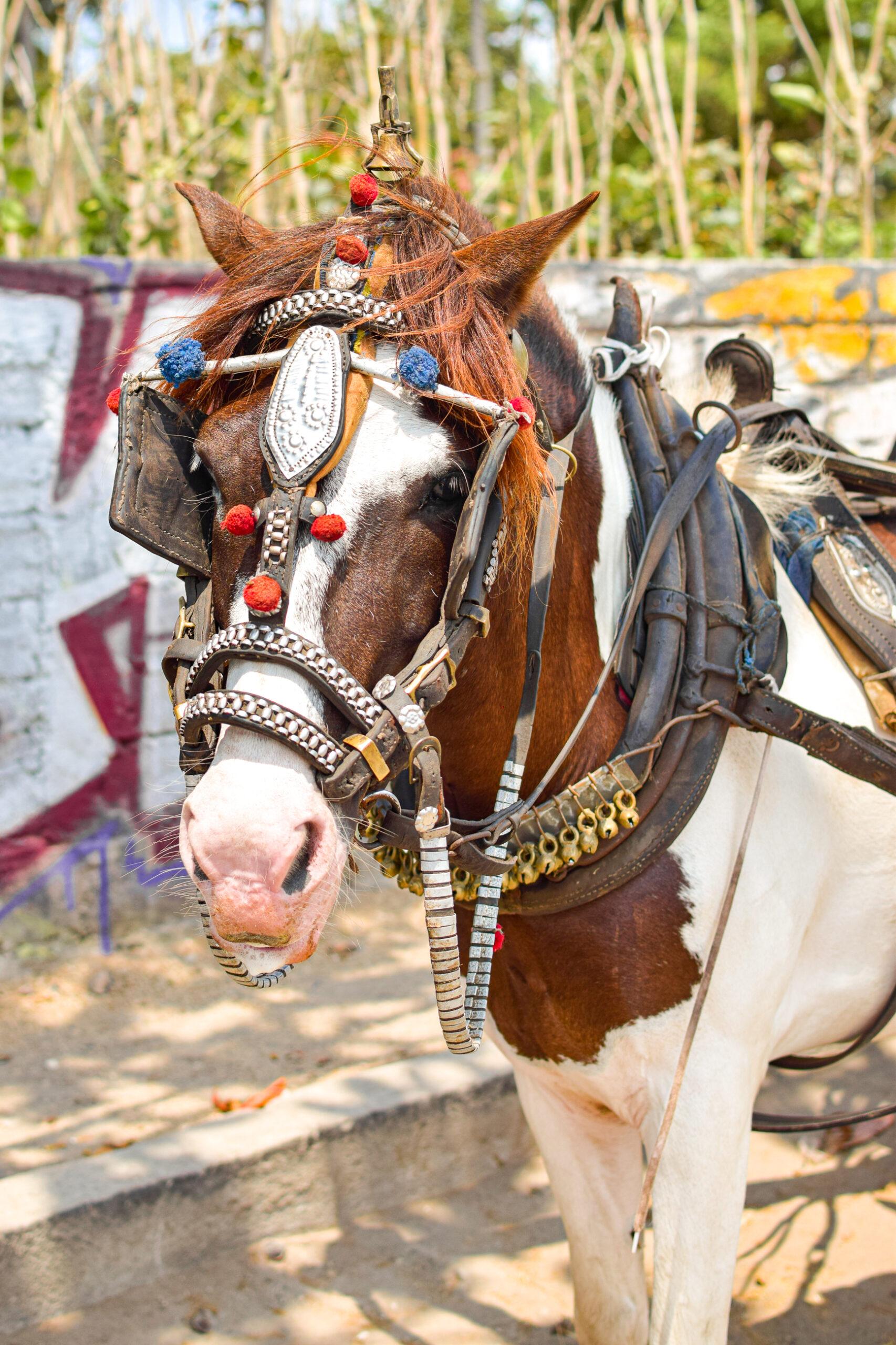 häst med färgglada toffsar på grimman.