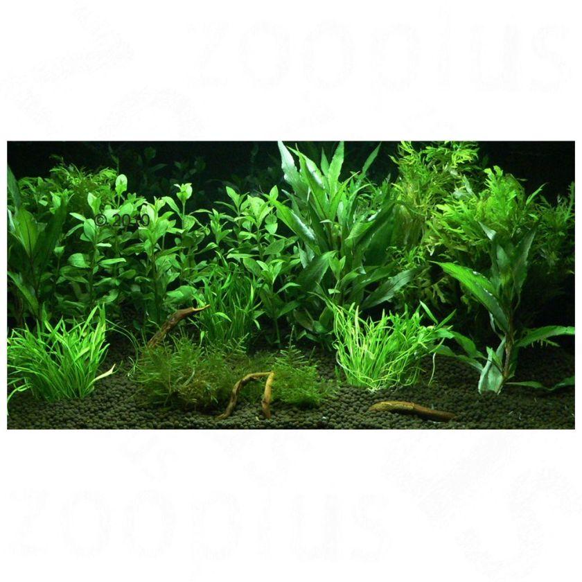 Plantes d´aquarium Zooplants ´´Jardin d´Eden´´ - 12 plantes