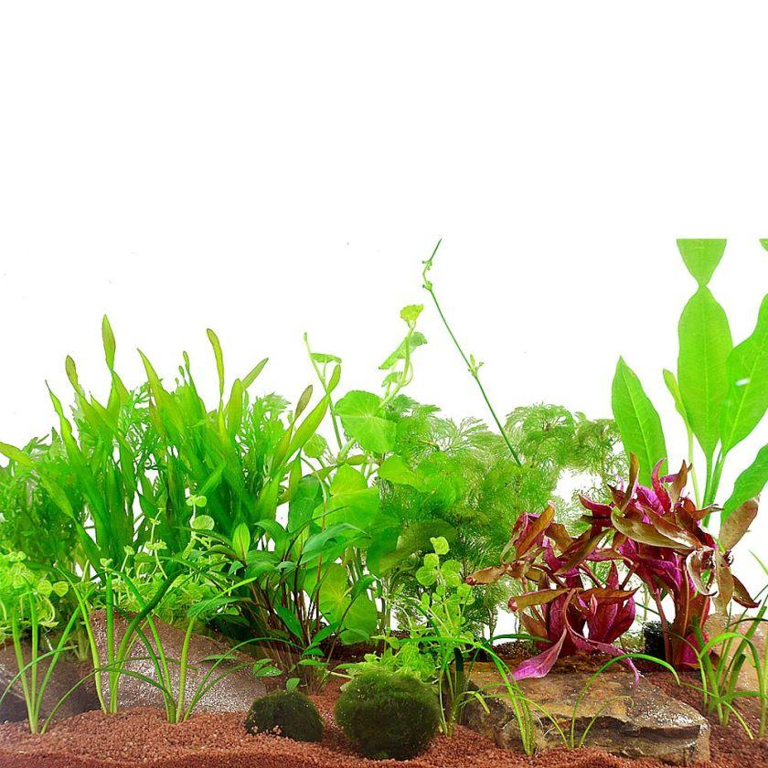 17 Plantes