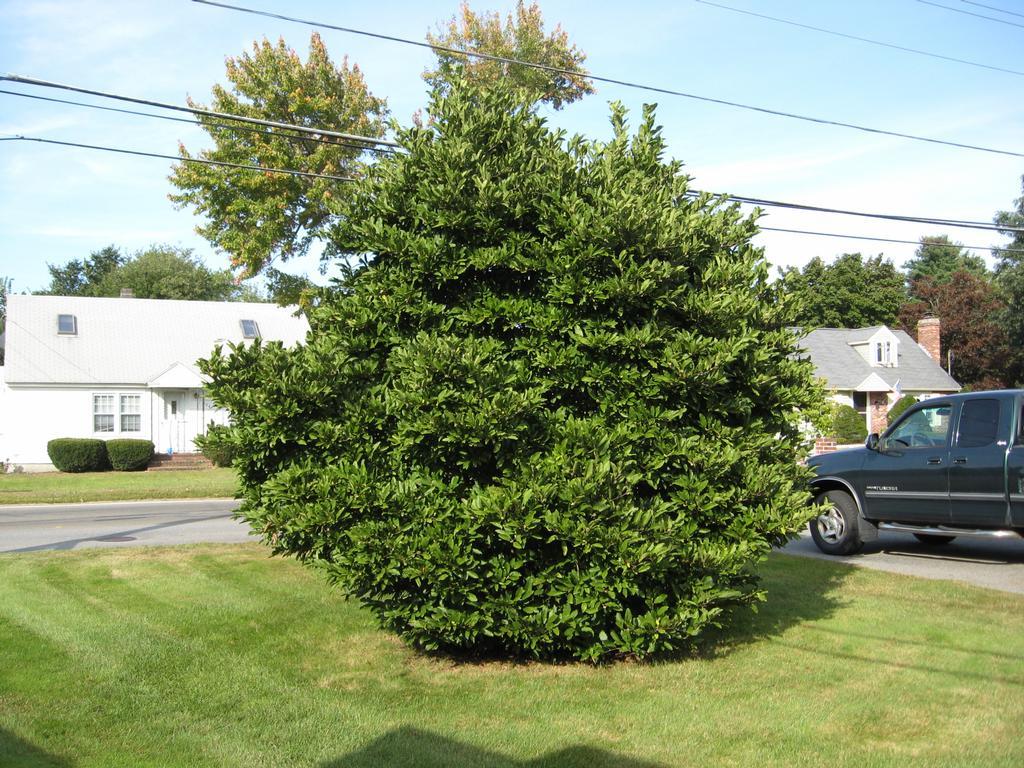 Garden Lawn Decor