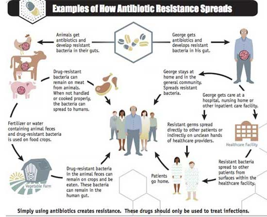 examples of how antibiotic resistance spreads