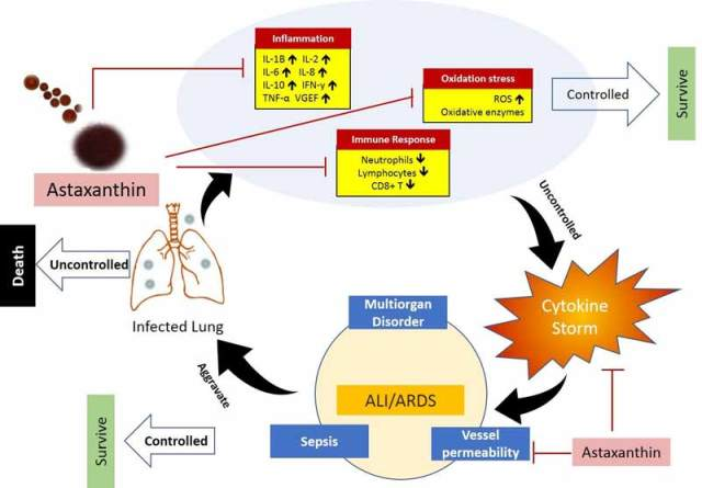 beneficial effects of astaxanthin