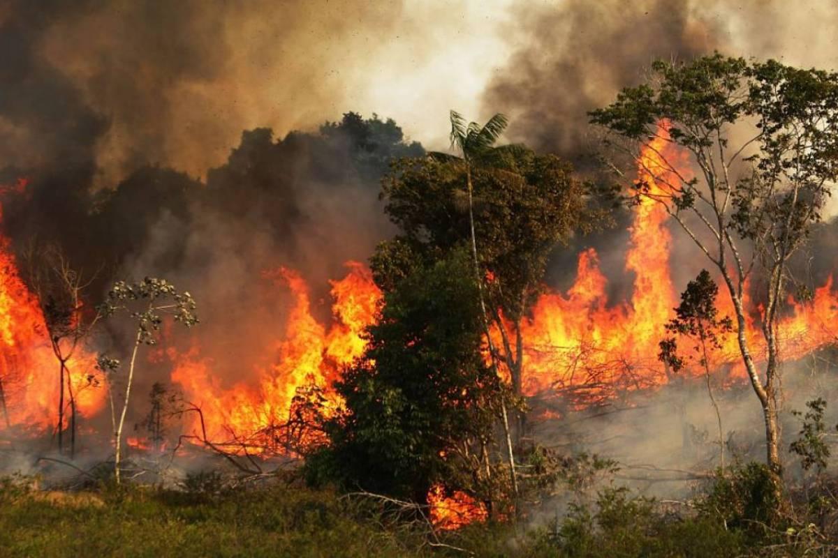 Resultado de imagen para incendios en el amazonas