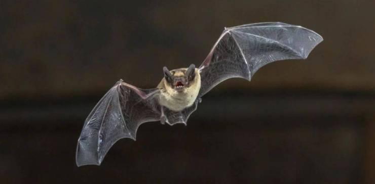 Murciélagos y serpientes serían clave en el origen de Coronavirus Wuhan, según un estudio