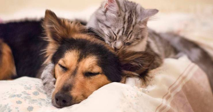 Coronavirus: gatos y hurones si pueden contagiarse con la enfermedad
