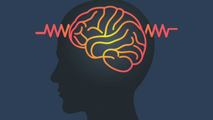 Estudios sobre el cerebro