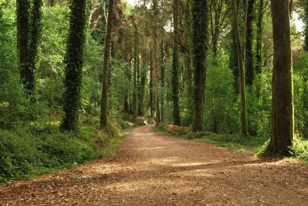 Sintra también cuenta con sus parques exuberantes para visitar