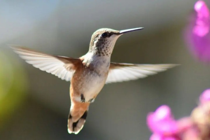 Photo of hummingbird representative of Twitter