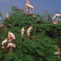 A Guide to Birdwatching in Bharatpur; Barsali Bhattacharyya; National Geographic