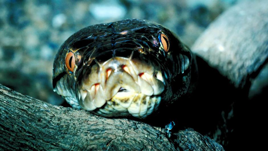 Serpents mortels