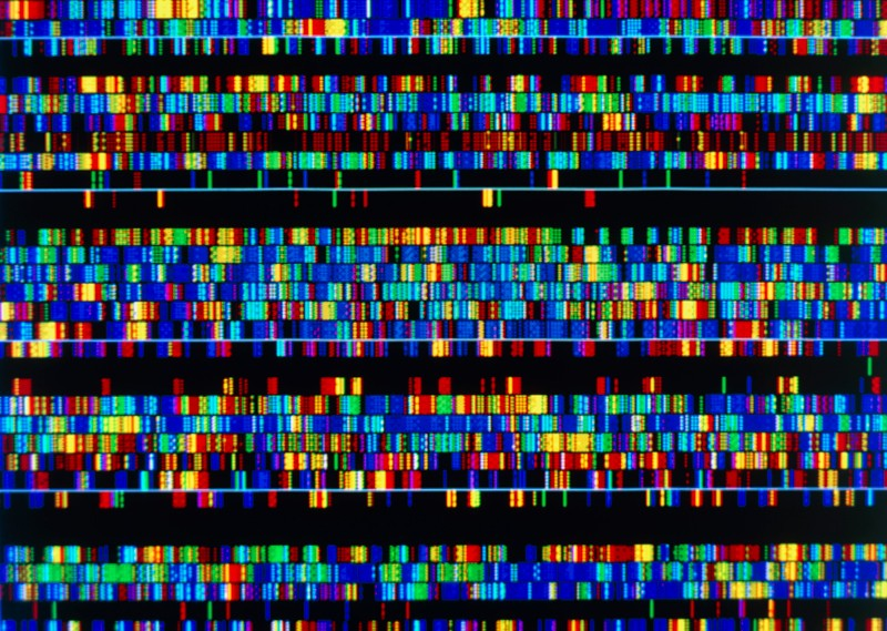 Computer screen display of a human DNA sequence, made up of lots of colourful boxes on a black background.