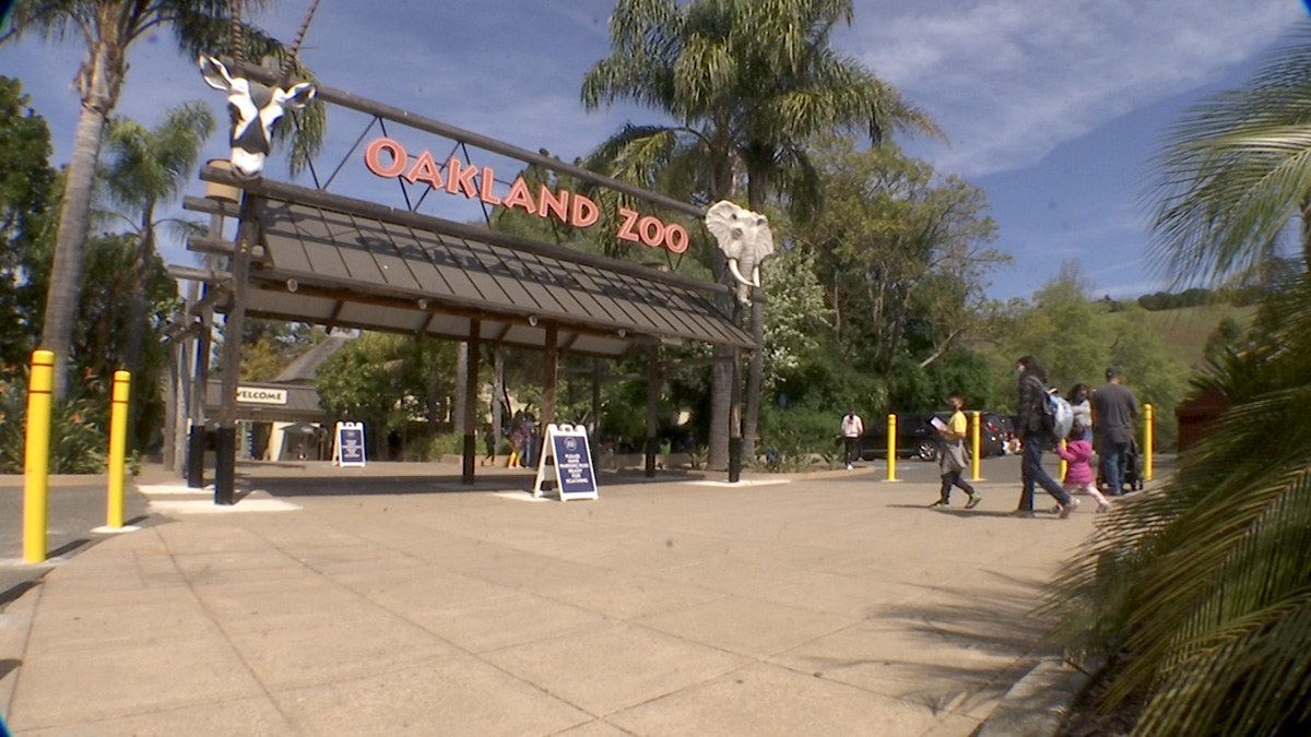 Oakland Hospital Turns To Zoo For Help In Last-Ditch Effort To Save Patient's Life