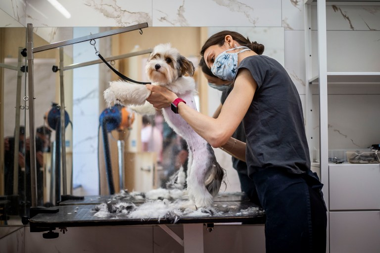 The How-Tos of Home Pet Grooming