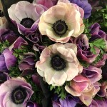 From Orchids To Calla Lily Find Out What Beautiful Flowers Are Decorating Our Set This Week By Jr Floral Studio Nyc Nbc New York